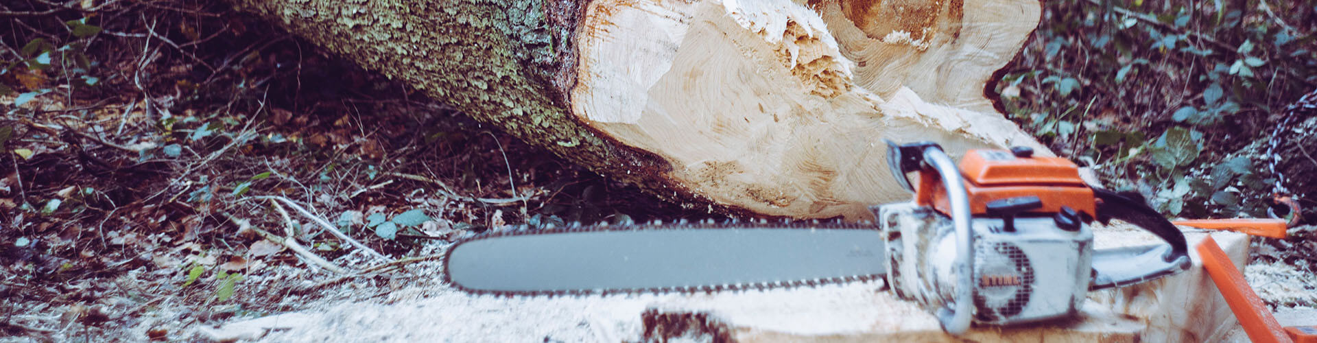 Tree felling, tree cutting and tree stump removal.